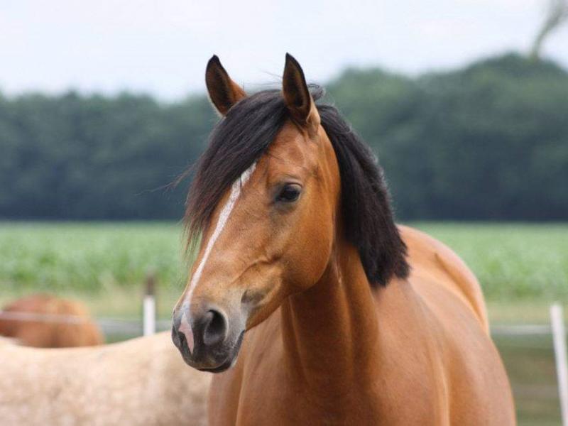 Tierarztpraxis Beel Pferd
